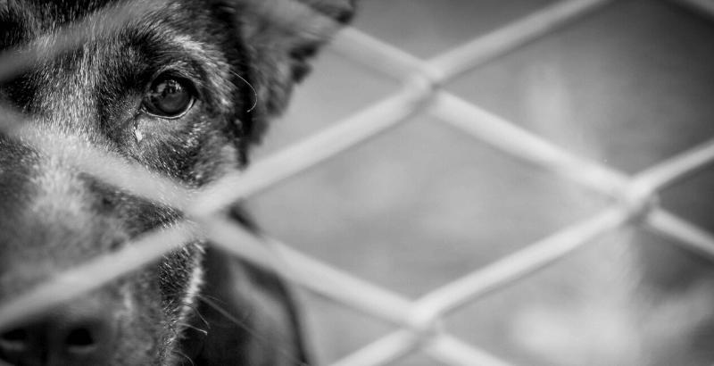 Samedi 27 juin 2020 : Journée Mondiale contre l'abandon des animaux de compagnie