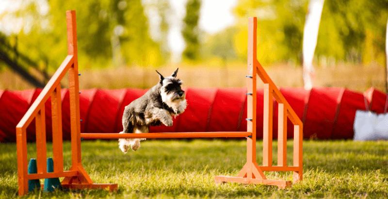 Soutenez les articulations de votre animal avec Flexadin !