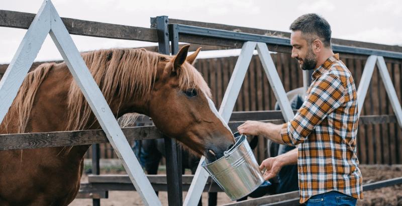 Faut-il donner de la spiruline à son cheval ?