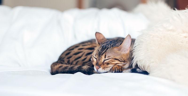 Créer un environnement respectueux du bien-être de son chat