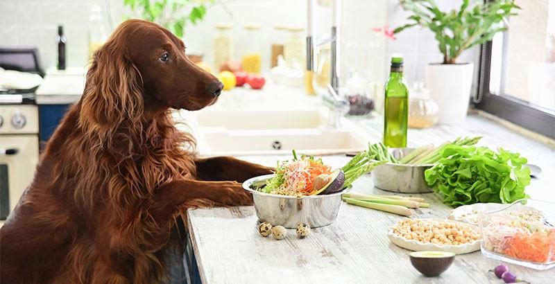 Un chien peut-il manger végétarien ?