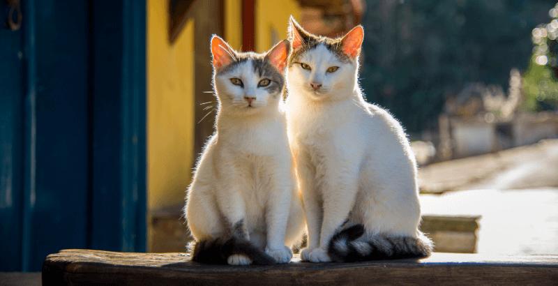 Canicule et fortes chaleurs : Quelles précautions prendre pour votre chat ?