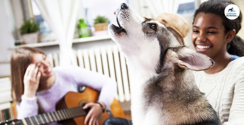 Vrai ou Faux : La musique relaxe les chiens