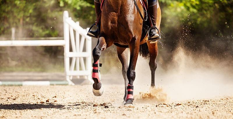 La lymphangite du cheval