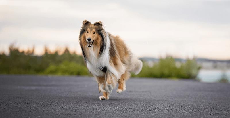 Comment savoir si son animal a des vers ?