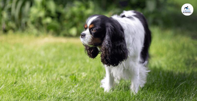 Que faire si son chien se fait mordre par un serpent ?