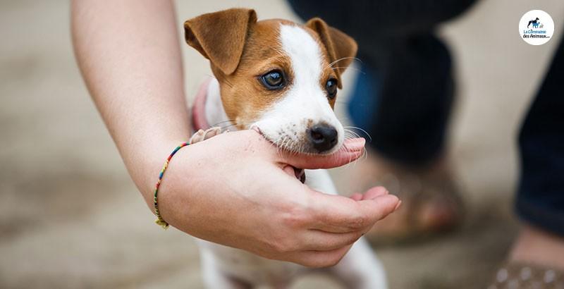 Comment lutter contre les mordillements de son chien ?