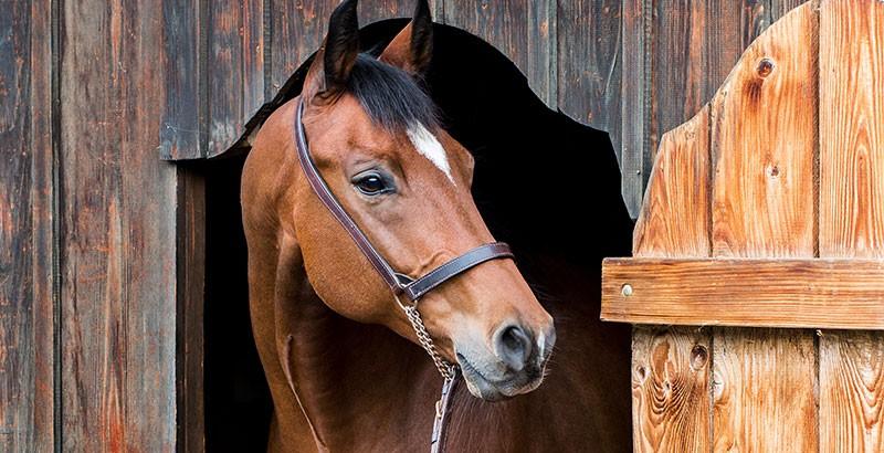 Comment choisir un licol pour son cheval ?