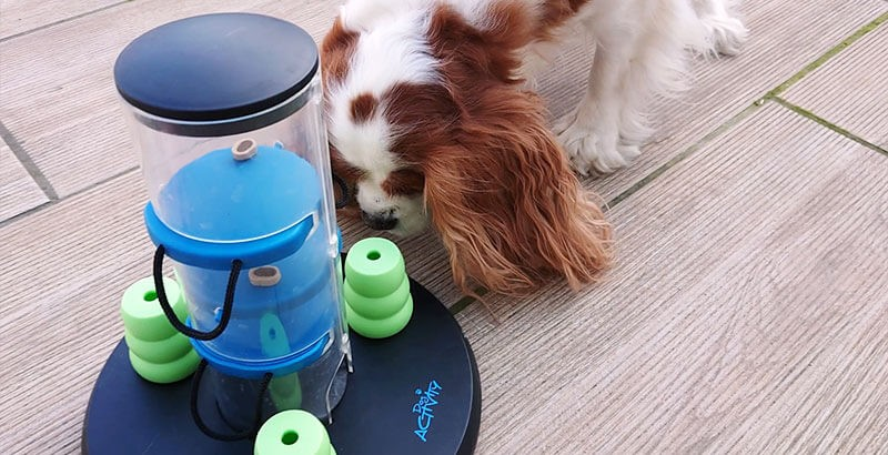 On a testé : Le Dog Activity Gambling Tower de Trixie