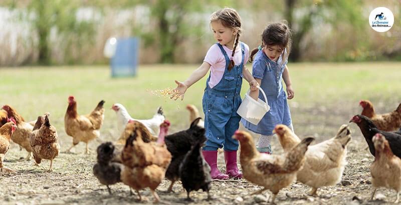 Quelles friandises choisir pour ses poules ?
