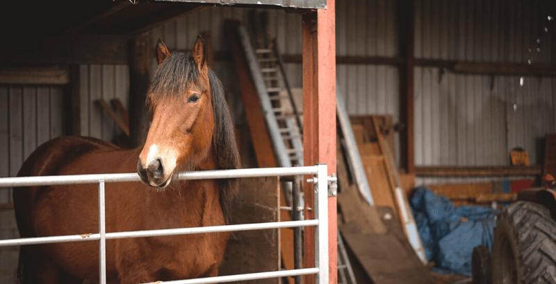 Les coliques du cheval