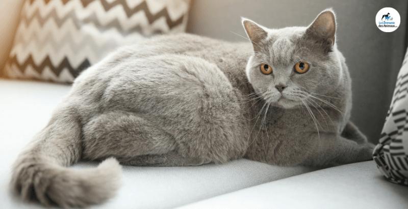 Comment maîtriser le poids de son chat avec Royal Canin ?