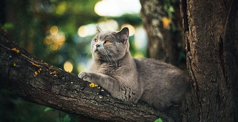 Quelle race de chat choisir ? Choisissez un chat qui vous correspond