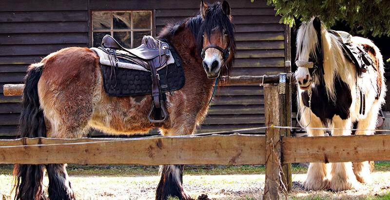 Comment protéger les tendons et ligaments des chevaux ?