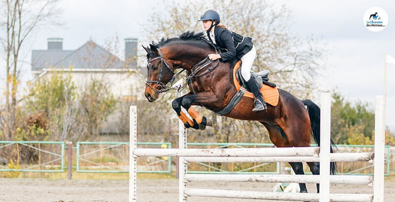 Le développement musculaire du cheval