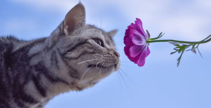 Peut-on donner des huiles essentielles à son chat?
