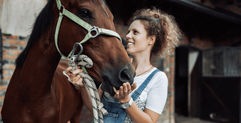 La Piroplasmose chez le cheval