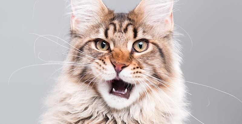 Le quart d'heure de folie du chat