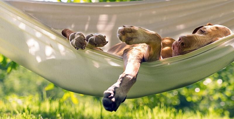 Un été détendu pour votre chien ou votre chat