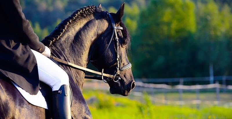 Tout savoir sur la toux du cheval