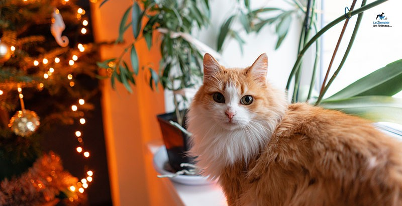 5 idées cadeaux pour que votre chat adore Noël !