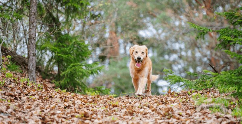 Faites la chasse aux parasites qui guettent votre chien !