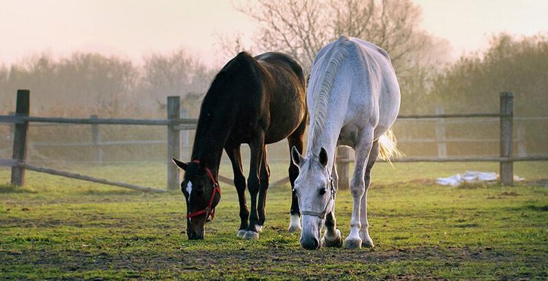 Le cheval et ses instincts