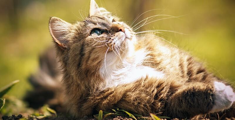 Vrai ou Faux : Mon chat patoune quand il est heureux