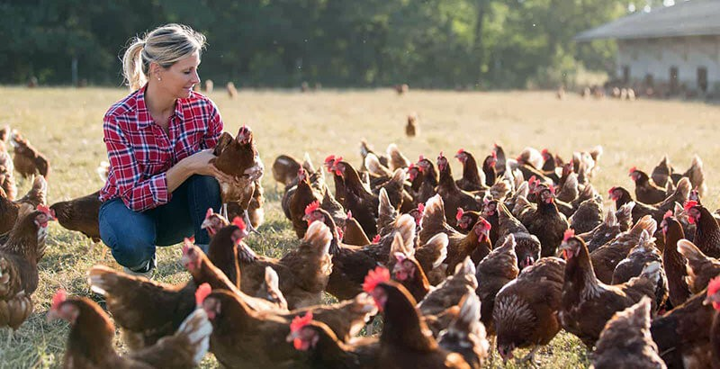Les 10 signes d'une poule en bonne santé