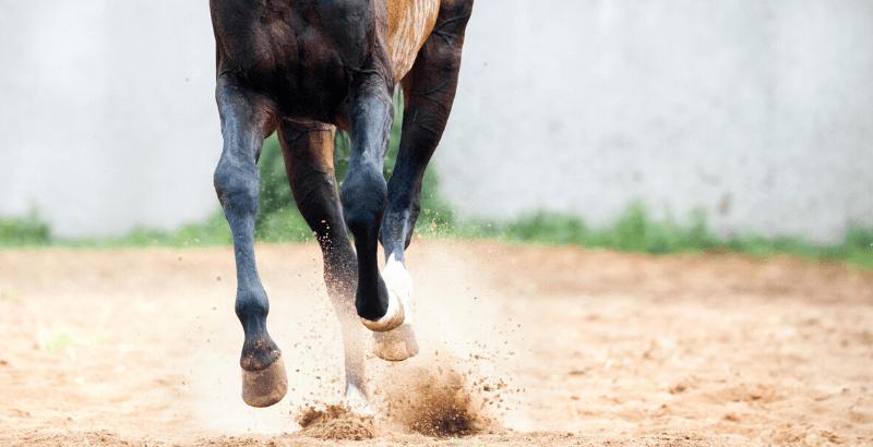 Quels sont les bienfaits de l'argile sur les membres de votre cheval ?