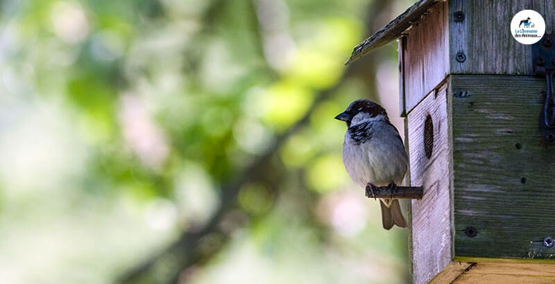 Choisir le bon nichoir pour les oiseaux de son jardin