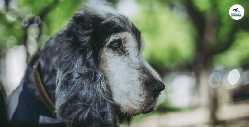 Chien aveugle : Comment prendre soin de lui au quotidien ?