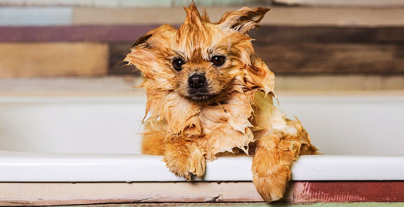 On a testé : Les shampoings professionnels Dogteur