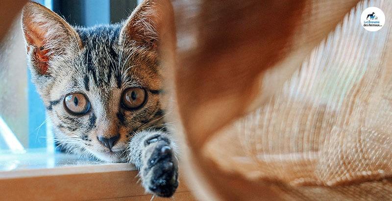 Vrai ou Faux : Il faut punir un chat sale en lui mettant la tête dans ses « bêtises »