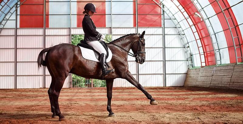 Le coup de sang chez le cheval : Symptômes et traitements