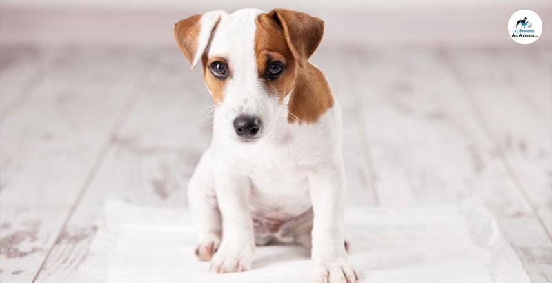 5 raisons pour lesquelles votre chien n'est pas propre