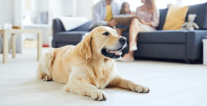 L'assurance santé animale : faut-il assurer son chien ou son chat ?