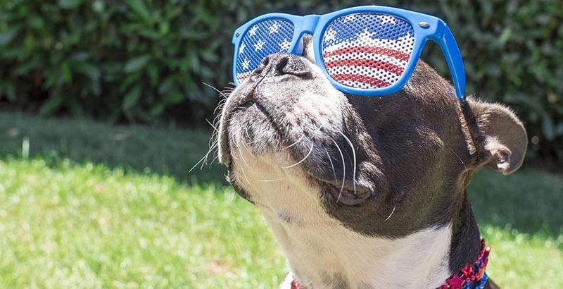 Rayons solaires, votre chien aussi doit être protégé !