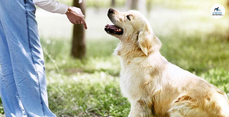 Comment dresser son chien soi même ?