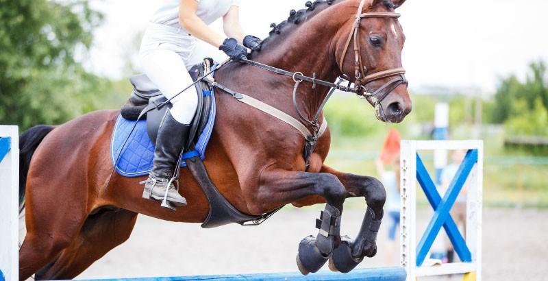 Efforts lors d'activités sportives : Comment soulager son cheval ?
