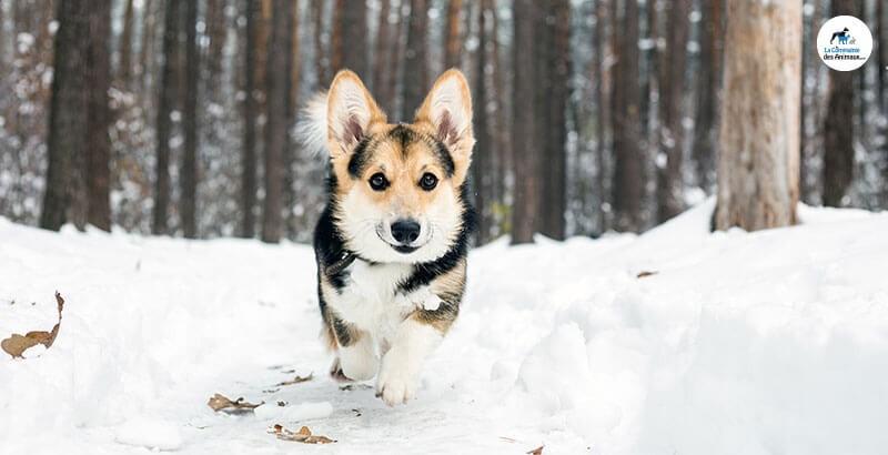 Préparer les vacances d'hiver avec son chien