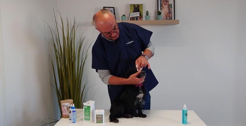 VIDEO VETO - Comment nettoyer les yeux de son animal ?