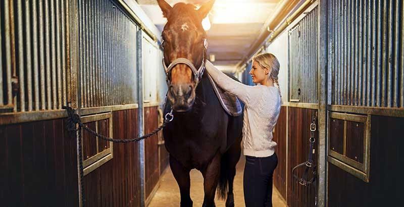 Faut-il faire vacciner son cheval ?