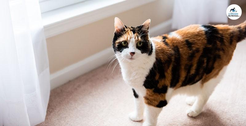 Pourquoi un chat marque-t-il son territoire ?