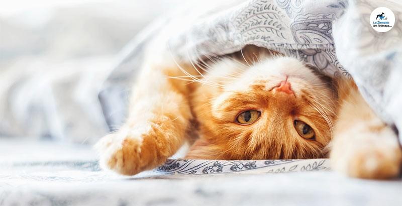 On a testé : Les gélules Zylkène pour chat
