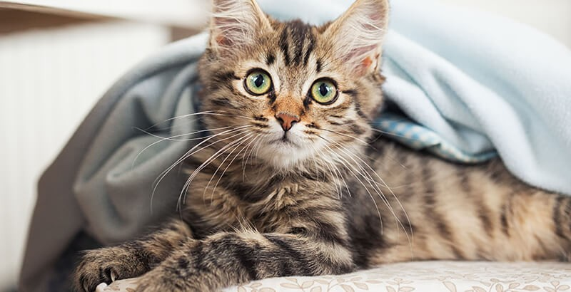 Comment soigner l'eczéma du chat ?