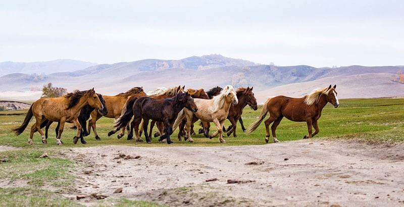 Mon cheval ne s'entend pas avec ses congénères, que faire ?
