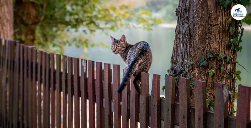Vrai ou Faux : Les chats ont le sens de l'orientation