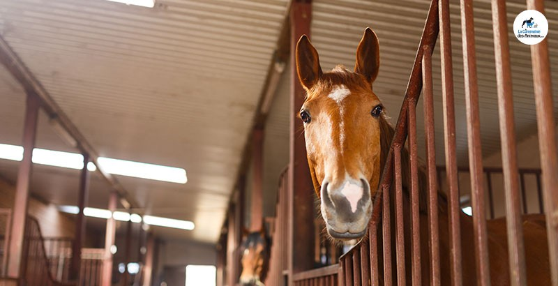 L'huile dans l'alimentation des chevaux