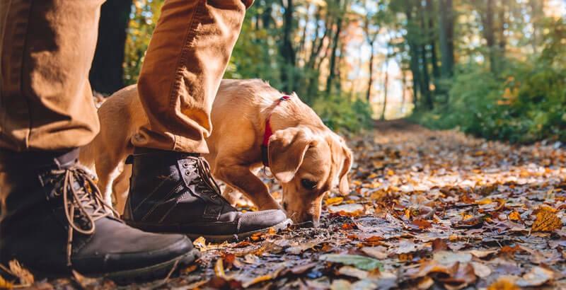 Se promener en forêt avec son chien : Que dit-la loi ?